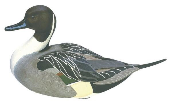 Loon Lake Decoy Company Miniature Pintail